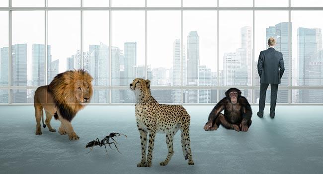 Tipos de liderazgo y conducta animal
